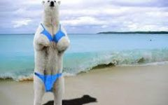 Polar Bears Accept Climate Change as Opportunity to Finally Perfect their Beach Bodies