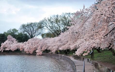 America's Greatest Springtime Tradition
