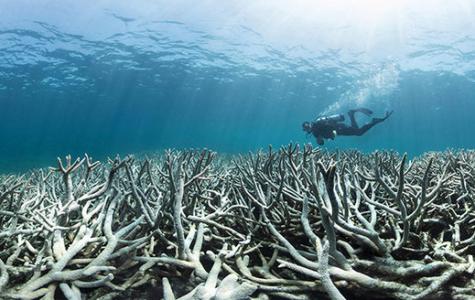 Is the Great Barrier Reef Dead?