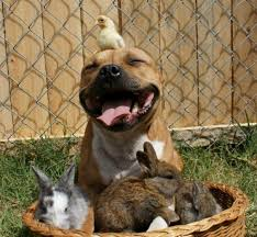 Pit Bulls; Absolutely Terrifying Dogs