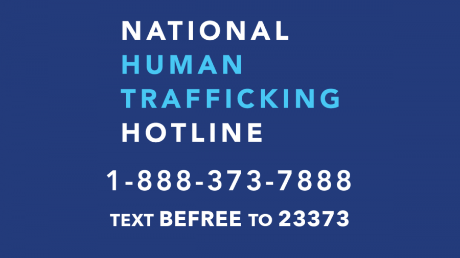 The+National+Human+Trafficking+Hotline+phone+number+and+text+support.