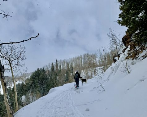 An uphiller skins up Ruthie's side of Aspen Mountain accompanied by their dog.