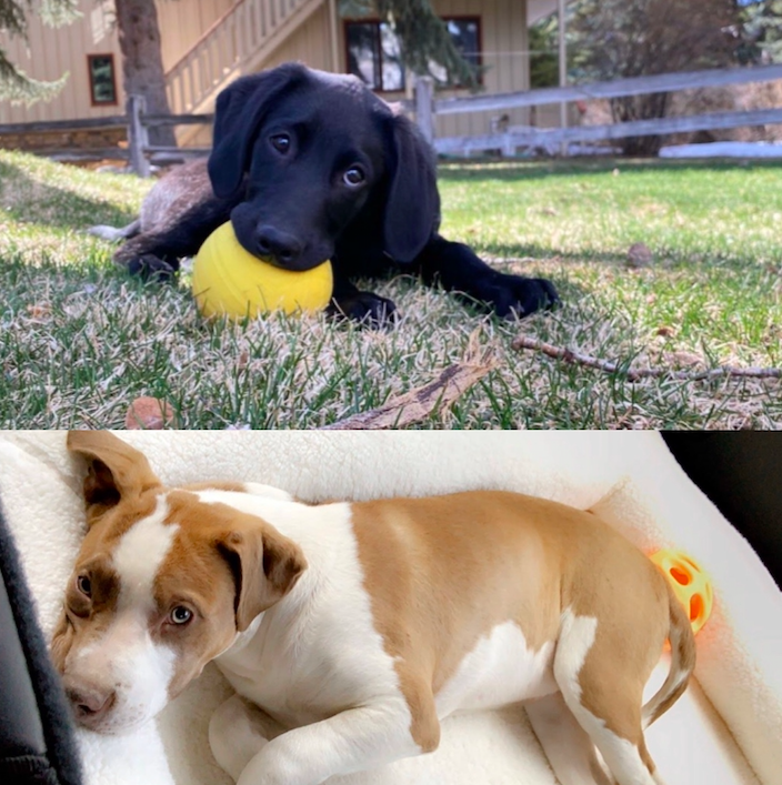 Top: Juliana Nickell's new puppy Milo  Bottom: Avery Hirsch's new puppy Roxie