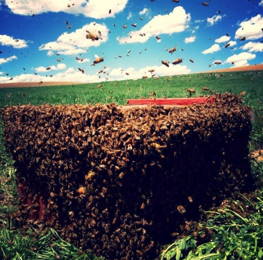 One+bee+hive+in+a+thousand+that+Derrick+takes+care+of+every+year