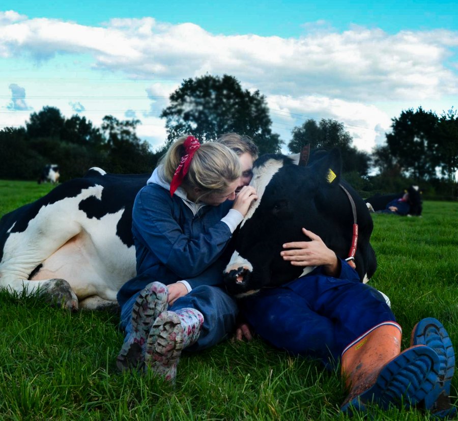Woman and man cuddle with cow at the Noord Empe farm.