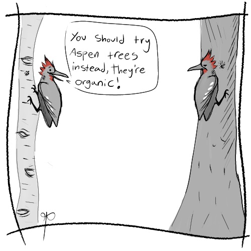 Woodpeckers argue about organic trees.