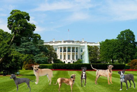 The White House is overrun with dogs and animal feces. Gross.